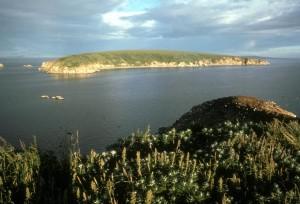 chamisso, island, puffin, island