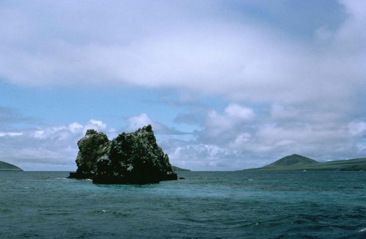 Crown of thorns reef Galapagos islands