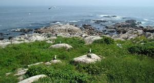 thacher, island, Massachusetts, coast