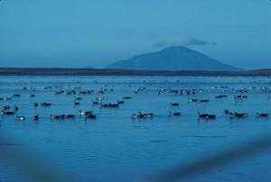 Izembek, lagune, amak, île