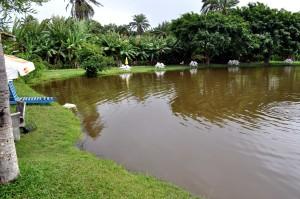 maravillosamente, adornado, lago, orilla, jardín, sillas de plástico,
