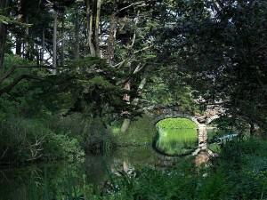 Bridge, mansikka, hill, stow lake golden gate, park