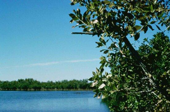 dense, green, branches, bank, water