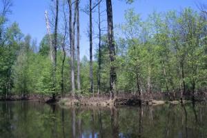 bord, étang, à feuilles caduques, à feuilles persistantes, arbres, croissant, rivage