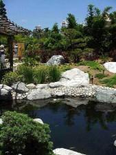 dostluk, Bahçe, Balboa, park, gölet