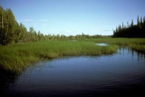 green, high, swamp, grass, water, landscape