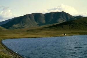 lac, été, scénique, blanc, maison, rivage, fond