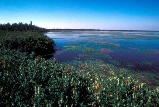 lake, covered, aquatic, vegetation