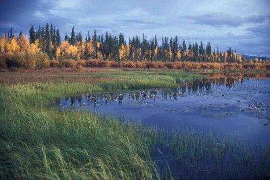 lake, fall, colors