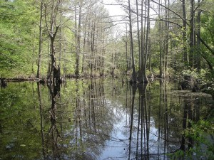 lake, forest