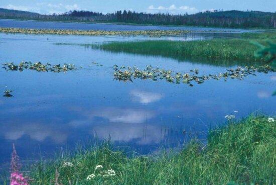 lake, summer, noon