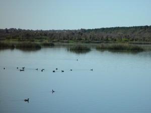 lake, joondalup, high