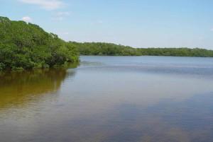 lac, l'eau, nature, forêt
