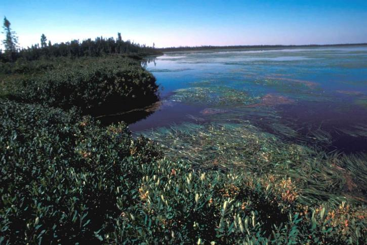 lac, envahis, l'eau, les mauvaises herbes