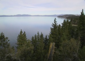 lake, Tahoe, pine, trees