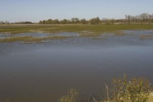 Hồ nước, cây, trồng, nền tảng, đến nay, cây