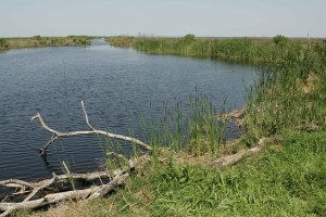 natural habitat, lake