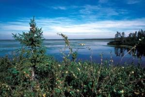 agréable, lac, scenics