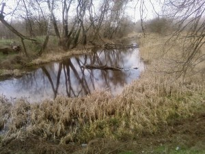 vieux, lac, nature, paysage