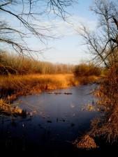 protégé, nature, réserve, paysage, lac