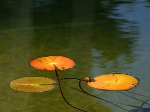 reflétant, étang