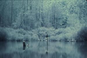 reflections, lake, marsh