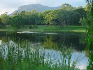 remo, barco, lago, vegetación, paisaje