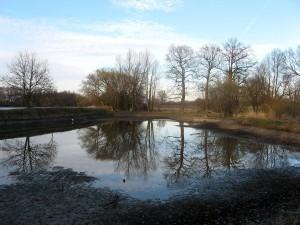 silt, pond