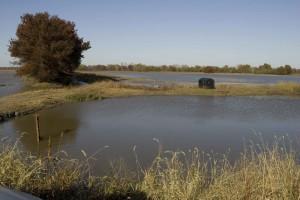 petit, noir, structure, étroite, sol, entre les deux, les étangs, la faune, l'observation, le canard, aveugle