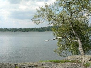 tree, lake, rock, shore
