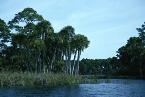 tropical, freshwater, lake, landscape