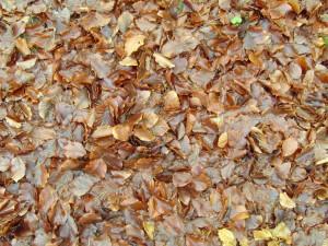 otoño, leaes, planta