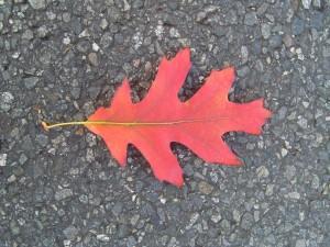 autumn, leaf, road