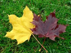 autumn, leaves, grass
