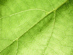 background, green leave, macro