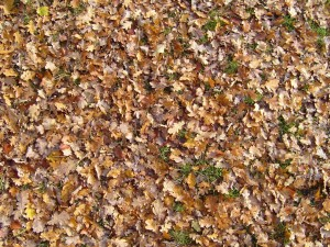 dry, leaves, ground