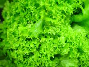 hydroponicznych, sałaty, liście, zielone