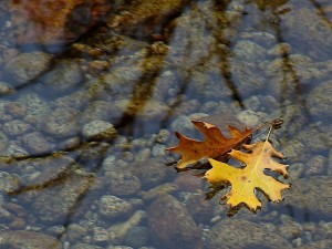 leaf, leaves, streams, water, reflections