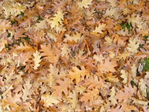 leaves, background