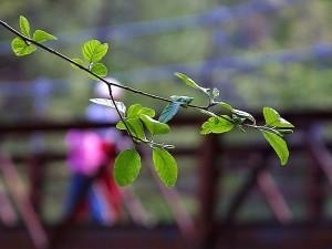 bruggen, bladeren, blad