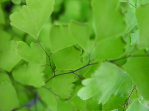 little, green leaves