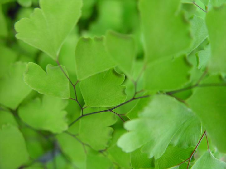 little, green leaves