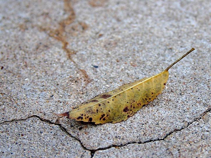 old, leaf, rock