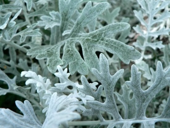 silver, leaves