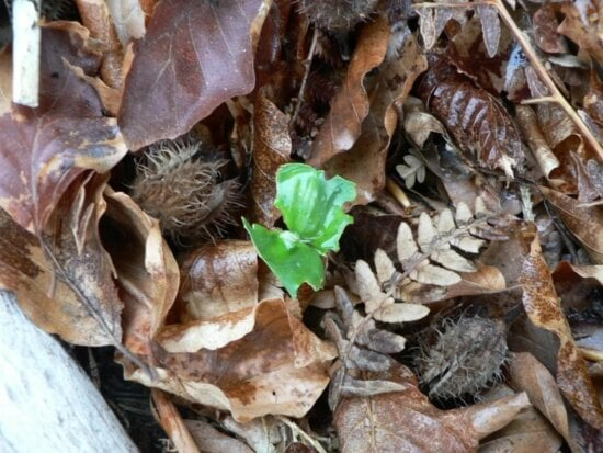 sprout, amoungst, dead, leaves