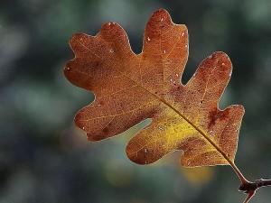 zion, parc national, feuilles, feuilles