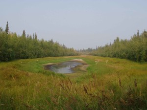 typical, small, lake, succumbs, meadow
