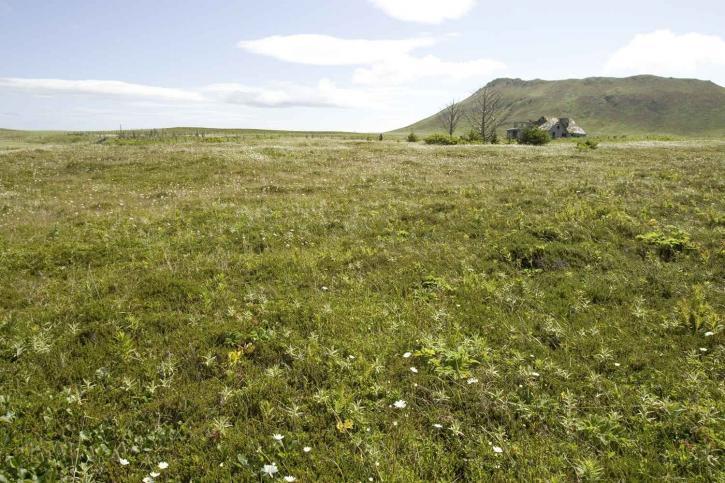flower, meadows, tiny, flowers, mountain