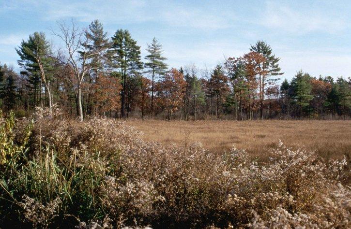 great, meadows, autumn