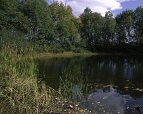 great, meadows, scenics